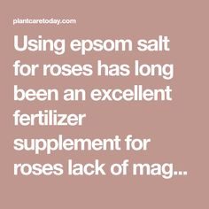 Using epsom salt for roses has long been an excellent fertilizer supplement for roses lack of magnesium during blooming. [LEARN MORE] Epsom Salt For Roses, Growing Ginger, Garden Yard Ideas, Rose Photos, Beautiful Roses, Modern Design, Learning, Gardening, Planting