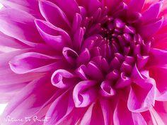Tapetenwechsel für junge Wilde: Pink Heart