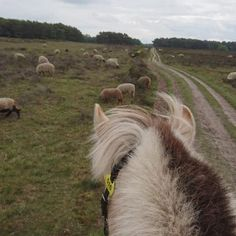 Perfect typical Dutch view!! Trail Riding, Dutch, Horses, Animals, Animales, Dutch Language, Animaux, Animais, Horse