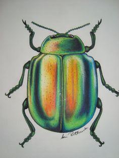 pencil crayon green beetle
