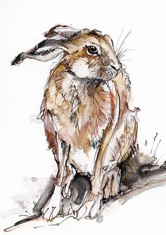 Seated Hare - Giclée print on poster paper by CreativeWithLine on Etsy Watercolor Paintings Of Animals, Animal Paintings, Watercolor Art, Animal Sketches, Animal Drawings, Art Drawings, Bunny Painting, Painting & Drawing, Hare Illustration