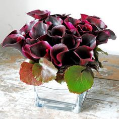 black calla lilies - would these grow in the south?