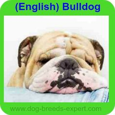 Dog Breeds Expert: Find the Perfect dog for you! Best Dog Food, Best Dogs, Calm Dog Breeds, The Perfect Dog, Dog Behavior, Dog Portraits, Long Legs, Royalty Free Images, Funny Dogs
