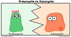 We have a new GIF that compares prokaryotes and eukaryotes!Remember all the rest of our GIFs are available at http://amoebagifs.blogspot.com/! :D