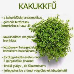 Kuponoldalak Közösségi oldala: Kakkukfű Herbal Remedies, Health Remedies, Natural Remedies, Health And Beauty Tips, Vegan Recipes Easy, Kraut, Natural Healing, Healthy Tips, Herbalism