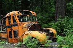 abandoned things in the forest | Old abandoned truck surrounded by tall grasses. Fruitland, Washington.