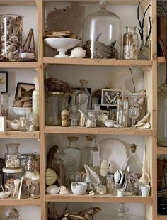 sibella court shelving filled with vintage shells butterflies eggs nests glass