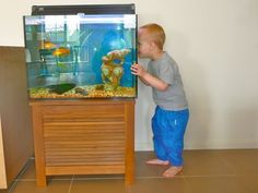 tips for putting a fish tank in a toddler or preschool classroom