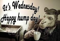 No pin limits! Wish Quotes, Happy Quotes, Me Quotes, Funny Quotes, Wednesday Coffee, Wednesday Hump Day, Hump Day Quotes, Drinking Quotes, Friday Humor