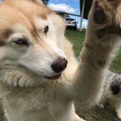 Reposting @dfdogs: Hi 5 !!!