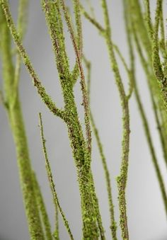 For table vases in spring - Birch Branches Moss Coated 4.5' (5 branches/ bunch)