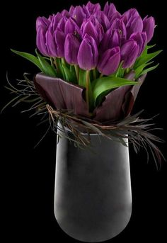 Purple tulips just ready to open wide. Purple Tulips, Tulips Flowers, My Flower, Fresh Flowers, Spring Flowers, Beautiful Flowers, Tulpen Arrangements, Floral Arrangements, Deco Floral