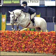 IDEA: Find one of those large leaf mesh blanket things (or a tarp), drape over j… – Art Of Equitation Horse Photos, Horse Pictures, Cross Country Jumps, Beautiful Horses, Simply Beautiful, Show Jumping, Horse Photography, Show Horses, Dream Barn