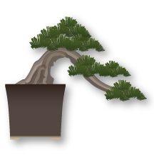 Estilo Bonsái Han-Kengai, semi-cascada estilos de bonsai