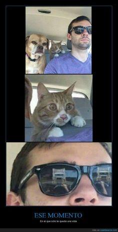La cara de este gato tiene un buen motivo para estar así - En el que sólo te queda una vida   Gracias a http://www.cuantarazon.com/   Si quieres leer la noticia completa visita: http://www.estoy-aburrido.com/la-cara-de-este-gato-tiene-un-buen-motivo-para-estar-asi-en-el-que-solo-te-queda-una-vida/