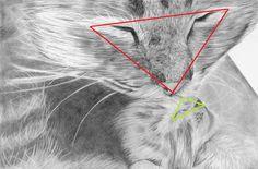 Turdusmerula Art - rysunki i portrety: Meow czyli rysunek kotów - krok po kroku