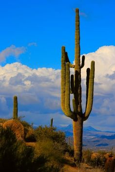 Giant Saguaro Southwest Desert landscape Fine art photography prints, decorative canvas prints, acrylic prints, metal Prints wall art  for sale on FineArtAmerica.com. Prints starting at $25. Copyright: James Bo Insogna