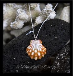 Bold and vibrant Tiger Stripe Hawaiian Sunrise Shell in deep orange and bright white, embellished with a sterling silver finding and draped on an 18 inch sterling silver rope chain necklace. The pendant shell measures 1 full inch with a round shape and has beautiful ruffles and ribs, and a perfect set of wings. A striking, brilliant shell to be admired by all who see it!  Hand made in Hawaii rare Sunrise Shells jewelry from the North Shore, Haleiwa, Oahu, Hawaii. #jewelry #hawaii…