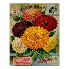 flores_coloridas_de_la_dalia_del_vintage_poster-ra5f328a7c8b6434f856d6e169997bc00_wxn_8byvr_512.jpg (512×512)