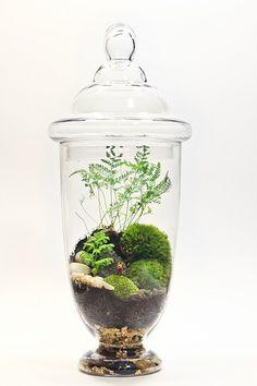 Bonsai Terrarium For Landscaping Miniature Inside The Jars 72 - DecOMG Aquaponics System, Aquaponics Diy, Aquaponics Greenhouse, Decoration Plante, Terraria, Cactus Y Suculentas, Plant Growth, Apothecary Jars, Organic Gardening