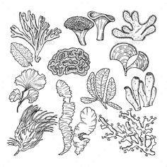 Buy Corals and Underwater Plants in Ocean or Aquarium by ONYXprj on GraphicRiver. Corals and underwater plants in ocean or aquarium. illustration of underwater plants seaw. Arte Coral, Coral Art, Underwater Plants, Underwater Art, Underwater Tattoo, Coral Reef Drawing, Sea Creatures Drawing, Sea Plants, Plant Drawing
