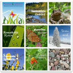 Rock middle school science with nature study.  NaturExplorers studies give you all the learning activity ideas you need.
