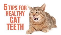 It's Pet Dental Health Month! See how to give your cat the healthiest smile possible.