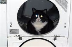 Cats in Dryers - Bing images