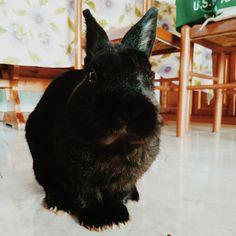 Il mio cuore è un coniglio nero. Skipper