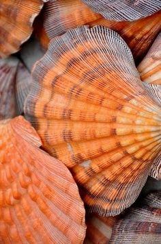 Orange and Grey Seashells