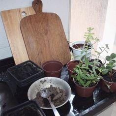 Renovando a horta com adubo vindo do sítio, as plantinhas adoram! . . . . #casadosfundos #horta #organicos #casa #minhacasa #instadecor #tabuas #apartamento #plantas #plants #decor #decoraçao #home #homestyle #interior #interiores #interioresdesign #instahome #instadecor #instadesign #cozinha #kitchen #kitchendesign #kitchendecor #design #designdeinteriores #vegetarian #vegetariano #rustic