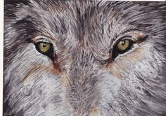 Wolf Eyes - Pastel on Board by Vincent Kennard