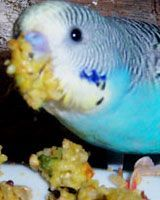 Budgie Food Recipes Cookbook - yummy recipes for your budgie parakeet bird parrot