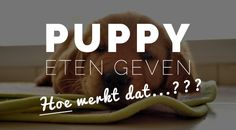 We gaan in dit onderwerp dieper in op het gewenste gedrag van u en uw puppy tijdens het etensritueel. Op welke tijdstippen krijgt uw puppy eten en wat dient ze er voor te doen en…