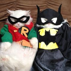 Batman and Robin cat costumes Costume Chat, Pet Costumes, Halloween Costumes, Funny Animal Pictures, Funny Animals, Cute Animals, Random Pictures, Funniest Animals, Funny Images