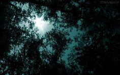 paisagem noite floresta - Pesquisa Google