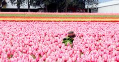 Time to visit the tulips -- and to divide your perennials