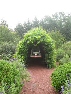 Love the grape arbor in the gardens at Roswell's Barrington Hall.