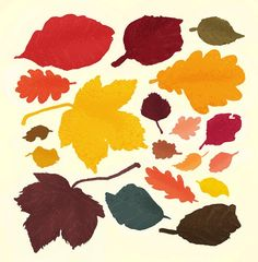 I like these different shades and shapes of autumn