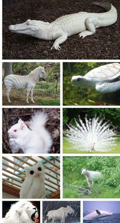 Rare albino animals: Animals Squirrel S, White Animals, Albino S, Animals Albinos, Rare Albino Animals, Amazing Animals, Rare Animals - Tap the pin for the most adorable pawtastic fur baby apparel! You'll love the dog clothes and cat clothes! <3