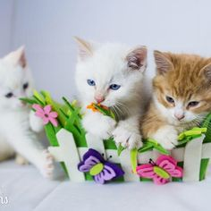 Sunny day... Sweepin' the clouds away... Their incredible rescue story: http://tinykittens.com