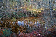 Sun highlights as autumn colors reflect in canal. Lough Key Forest Park Roscommon, west of Ireland. Forest Park, My Photos, Change, Mountains, Plants, Travel, Viajes, Destinations, Plant
