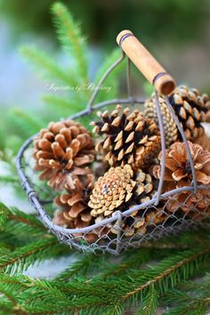 Nothing like the smell of pine cones at Christmas ~