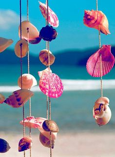 love sea shells.. I could spend hours looking at them and for them