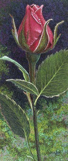 Donna Slade, colored pencil