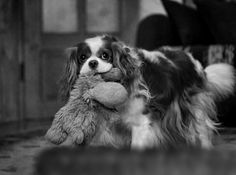 Favorite toy by Laura Pashkevich on 500px