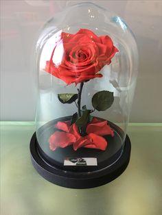De magische Belle en het Beest roos in een stolp met gravure.