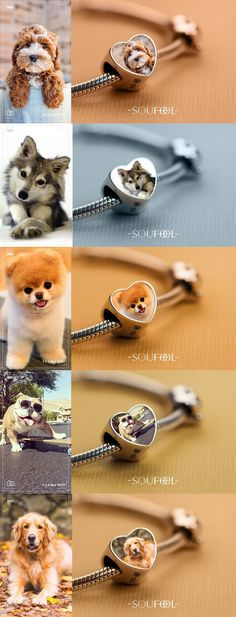Make one special photo charms for your pets, compatible with your Pandora bracelets. This is a bracelet which you can put your puppy's photo in it! Soufeel personalized charms bracelet, for every memorable day! Animals And Pets, Baby Animals, Funny Animals, Cute Animals, Cute Puppies, Cute Dogs, Dogs And Puppies, Doggies, Bracelet Avec Photo