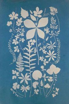 Textures Patterns, Print Patterns, Botanical Illustration, Illustration Art, Stencil, Sun Prints, Fine Paper, Cyanotype, Motif Floral