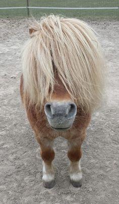 Породистые Лошади, Милые Животные, Животные, Краска, Смешные Лошади, Рисунки С Волками